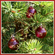 Cranberry Red Crystal Glass Two Inch Ornament Ball (set of 3) - Wholesale